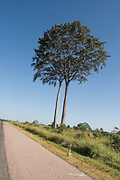 The road North into the heart of a region plagued with conflict. Gulu Road North, Gulu District, Uganda, Africa, December 2005 © Stephen Blake Farrington