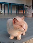 Retrato de tardes y gatos / Panamá.<br /> <br /> Edición de 10 | Víctor Santamaría.