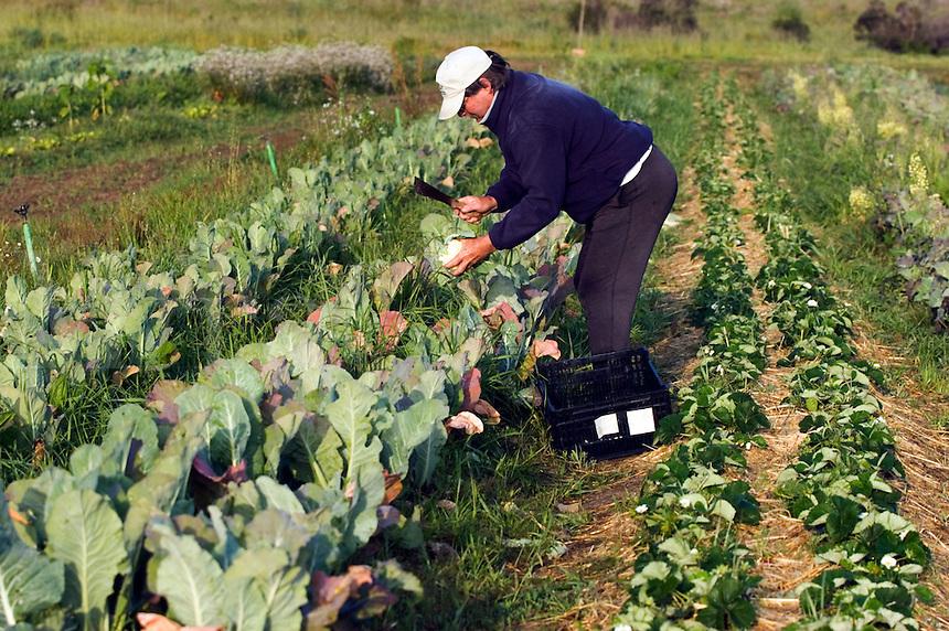 Small scale farmer at work in Los Osos, California<br />