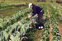 Small scale farmer at work in Los Osos, California<br />