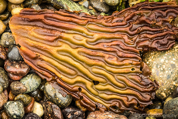 Colorful seaweed on rocky shore