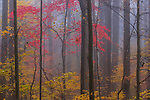 Great Smoky Mountains National Park,Tennesee