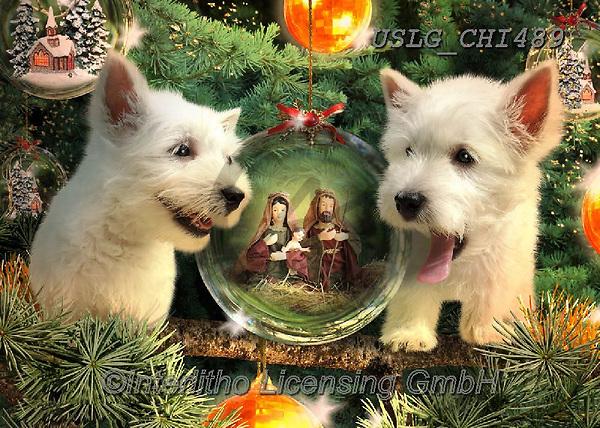 CHIARA,CHRISTMAS ANIMALS, WEIHNACHTEN TIERE, NAVIDAD ANIMALES, paintings+++++,USLGCHI489,#XA# ,funny ,funny