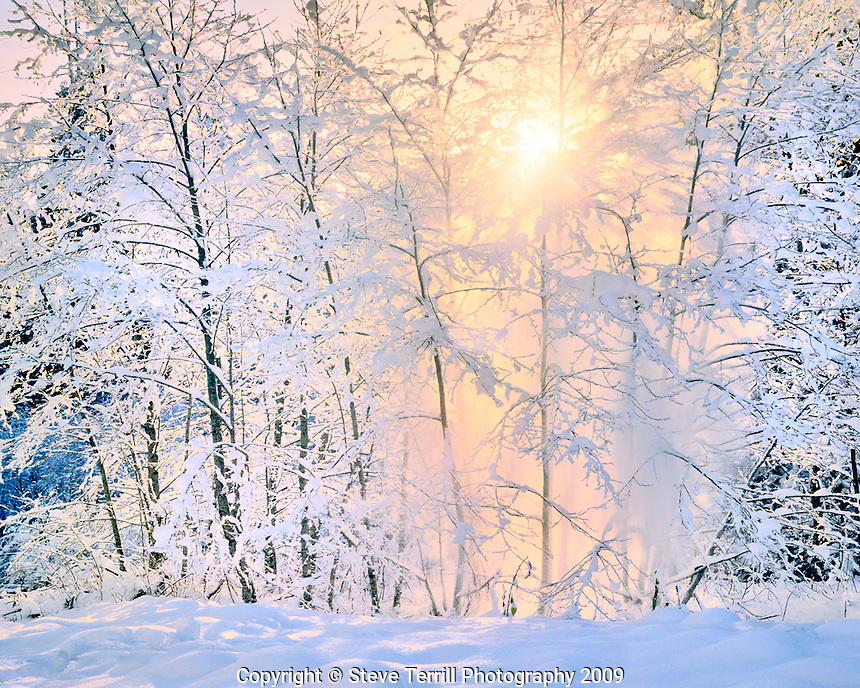 Sunset beaming through snow covered trees in Mt Hood National Forest Oregon