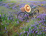 Bike parked in a countryside flower field .Los Padres National Forest, Central California
