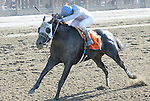 Sahara Sky (no. 7), ridden by Joel Rosario and trained by Jerry Hollendorfer, wins the  120th running of the grade 1 Metropolitan Handicap for  three year olds and upward on May 27, 2013 at Belmont Park in Elmont, New York.  (Bob Mayberger/Eclipse Sportswire)