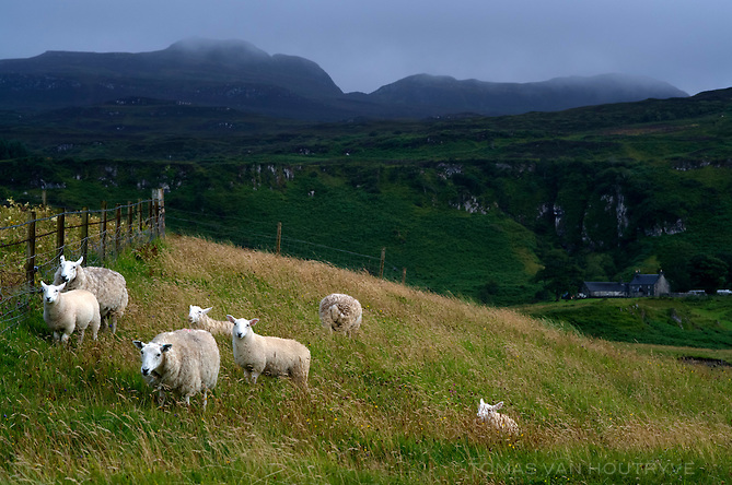 Sheep are seen near the Bay of Laig on the Isle of Eigg, Scotland.