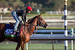 OCT 28 2014:Tom's Tribute, trained by James Cassidy, exercises in preparation for the Breeders' CupMile  at Santa Anita Race Course in Arcadia, California on October 28, 2014. Kazushi Ishida/ESW/CSM