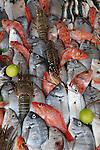 Marokko, Region Marrakesch-Tensift-El Haouz, Essaouira an der Atlantikkueste: Meerresfruechte, Auslage in einem Restaurant am Hafen | Morocco, Region Marrakesh-Tensift-El Haouz, Essaouira at the Atlantic Coast: Seafood display in harbour restaurant