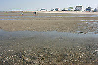 People in search of clams travers the tidal flats at low tide along Bowers Beach,Delaware. Atlantic Ocean