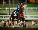 ARCADIA, CA - OCTOBER 22: Gun Runner gallops at Santa Anita Park on October 22, 2017 in Arcadia, California. (Photo by Alex Evers/Eclipse Sportswire/Getty Images)