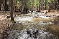 Durch Schmelzwasser ueberfluteter Wanderweg antlang des Kings River im Kings Canyon im kalifornischen Sequoia National Park.<br /> 8.6.2017, Sequoia National Park<br /> Copyright: Christian-Ditsch.de<br /> [Inhaltsveraendernde Manipulation des Fotos nur nach ausdruecklicher Genehmigung des Fotografen. Vereinbarungen ueber Abtretung von Persoenlichkeitsrechten/Model Release der abgebildeten Person/Personen liegen nicht vor. NO MODEL RELEASE! Nur fuer Redaktionelle Zwecke. Don't publish without copyright Christian-Ditsch.de, Veroeffentlichung nur mit Fotografennennung, sowie gegen Honorar, MwSt. und Beleg. Konto: I N G - D i B a, IBAN DE58500105175400192269, BIC INGDDEFFXXX, Kontakt: post@christian-ditsch.de<br /> Bei der Bearbeitung der Dateiinformationen darf die Urheberkennzeichnung in den EXIF- und  IPTC-Daten nicht entfernt werden, diese sind in digitalen Medien nach §95c UrhG rechtlich geschuetzt. Der Urhebervermerk wird gemaess §13 UrhG verlangt.]