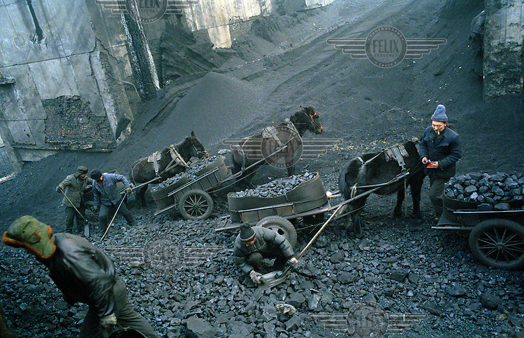 Migrant workers shovel coal into horse-drawn carts at a coal mine. Shanxi is the largest producer of coal in China.  The rate of coal mining in the country is increasing from an annual production of over 2 billion tons in order to cater for China's rapid economic growth.