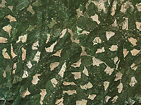 Clearcutting Forests Aerial Photography