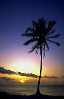 Palm tree at sunset, Ambergis Caye, Belize