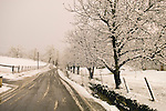 Snow covers the trees, road and ground during an evening winter storm, Jackson Gate, Amador County, Calif.