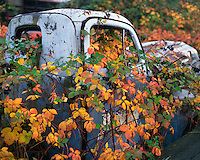 Abandoned pickup in Multnomah County Oregon