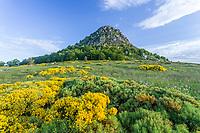 France, Ardèche (07), parc naturel régional des Monts d'Ardèche, Massif du Mézenc, le Mont Gerbier-de-Jonc  (1551 m)