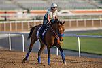 MEYDAN,DUBAI-MARCH 25: Hoppertunity ,trained by Bob Baffert,exercises in preparation for the Dubai World Cup at Meydan Racecourse on March 25,2016 in Meydan,Dubai (Photo by Kaz Ishida)