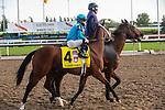 September 19, 2020: #4 Starship Jubilee, ridden by Justin Stein and trained by Kevin Attard heads to the post for the Grade 1 Ricoh Woodbine Mile at Woodbine Racetrack in Toronto, Ontario, Canada.