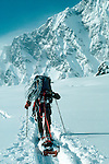 Alaska, Back country skiers climbing the Southeast Buttress, Denali, Denali National Park, Mount McKinley, Ruth Amphitheater