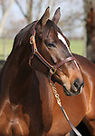 09 November  2009 Fasig TIpton November Breeding Stock sale.  Hip #109 Lady Joanne, consigned by Adena Springs.  A Graded Stakes winner of over $980,000, she is in foal to the outstanding sire, Tiznow.