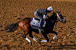 November 5, 2020: Speech, trained by trainer Michael W. McCarthy, exercises in preparation for the Breeders' Cup Filly & Mare Sprint at Keeneland Racetrack in Lexington, Kentucky on November 5, 2020. John Voorhees/Eclipse Sportswire/Breeders Cup/CSM