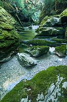 Moss cloaked boulders in Cave Creek in Punakaiki, Paparoa National Park, West Coast, Buller Region, New Zealand