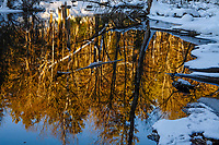 Reflections in Alder Creek in the Adirondack Moutains of New York State