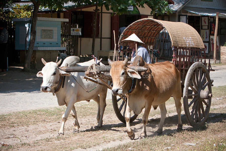 Myanmar, Burma.  Mingun, near Mandalay.  Ox-drawn Taxi.