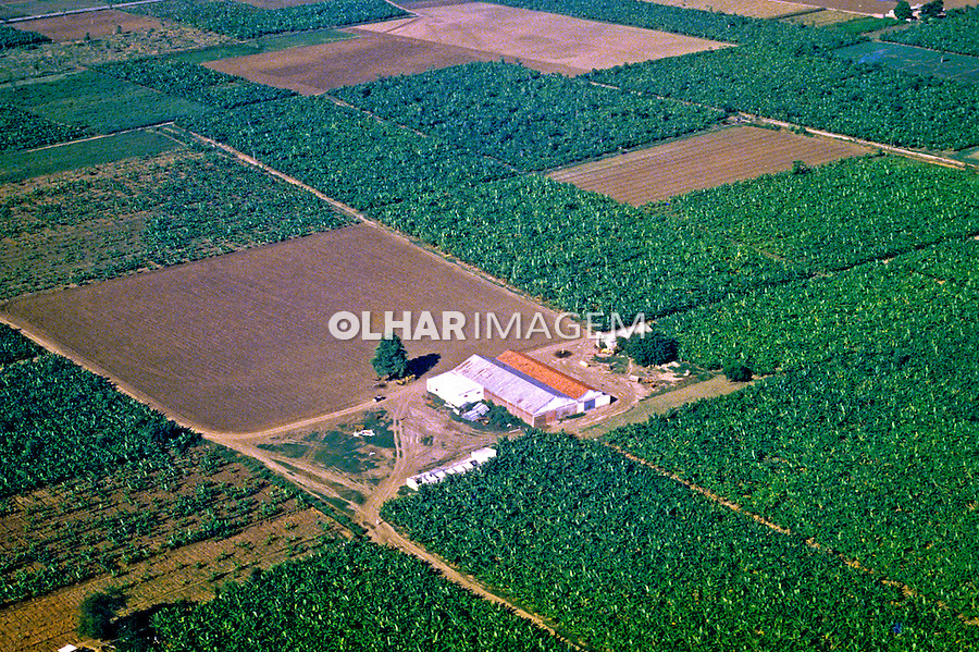 Plantação de banana, Benguela. Angola. Foto de Ricardo Azoury. Data: 1991
