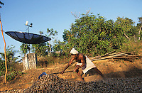 INDIA, Karnataka, farmer drying betel nut or Areca nut in front of satellite dish antenna in small village, Areca nut are consumed as drug pan wrapped in betel leaf / INDIEN Karnataka, Farmer trocknet Betelnuesse vor Satellitenantenne fuer Fernsehempfang in einem Dorf