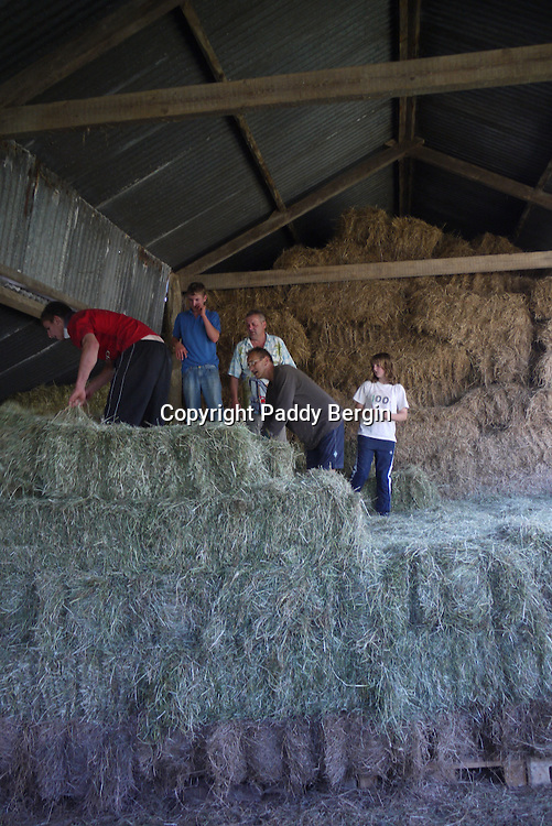 Unloading and stacking hay bales on a small family owned farm in the village of Llanafan which is in the county of Ceredigion, West Wales. The village is situated on the north side of the beautiful Ystwyth Valley and the river eventually flows into the sea at the seaside town of Aberystwyth. Haymaking for this farm is an important time and is dependant on the weather. When its good enough and the grass is cut it is left to dry and then collected as in these photos. Local people come and help to ensure all the hay is brought in and stored in the barn.<br /> The tractor they are using is a 1953 Massey Ferguson which is still in good working order. Stock Photo by Paddy Bergin