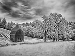 Infrared image of old barn with stand of trees and vineyard