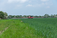 Applying fungicide to winter wheat field with environmental margin - Lincolnshire; June