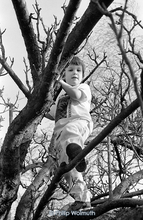 5 year-old boy climbing a tree, Buckinghamshire.
