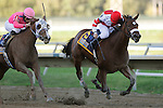 02 OCT 2010: Havre de Grace (#5), ridden by Jeremy Rose, wins the Gr. II Cotillion Stakes and Blind Luck, Joel Rosario up, is second; Parx Racing at Philadelphia Park, Bensalem, PA. (photo by Joan Fairman Kanes)