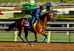 October 30, 2019: Breeders' Cup Juvenile Fillies entrant Bast, trained by Bob Baffert, exercises in preparation for the Breeders' Cup World Championships at Santa Anita Park in Arcadia, California on October 30, 2019. Scott Serio/Eclipse Sportswire/Breeders' Cup/CSM