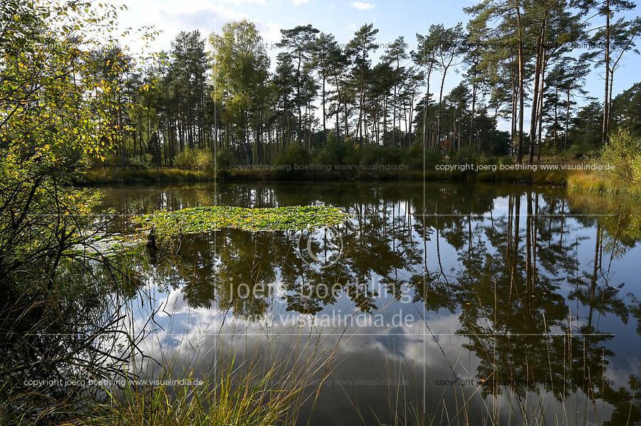 GERMANY, lower saxonia, heath moor and forest / DEUTSCHLAND, Niedersachsen, Lüneburger Heide, Wald und Moor, Ottermoor