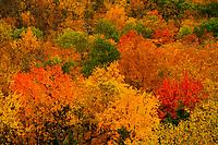 Autumn Foliage In The Adirondack Mountains Of New York State