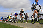 The peloton including Garmin-Barracuda's Johan Van Summeren (BEL) on the 2nd cobbled sector at Doorne during the 96th edition of The Tour of Flanders 2012, running 256.9km from Bruges to Oudenaarde, Belgium. 1st April 2012. <br /> (Photo by Steven Franzoni/NEWSFILE).