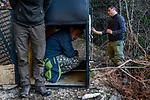 Balkan Lynx (Lynx lynx balcanicus) biologists, Lilli Middelhoff, Dime Melovski, and Eko Veapi, checking box trap, Mavrovo National Park, North Macedonia