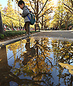 Ginkgo Leaves Turn Yellow