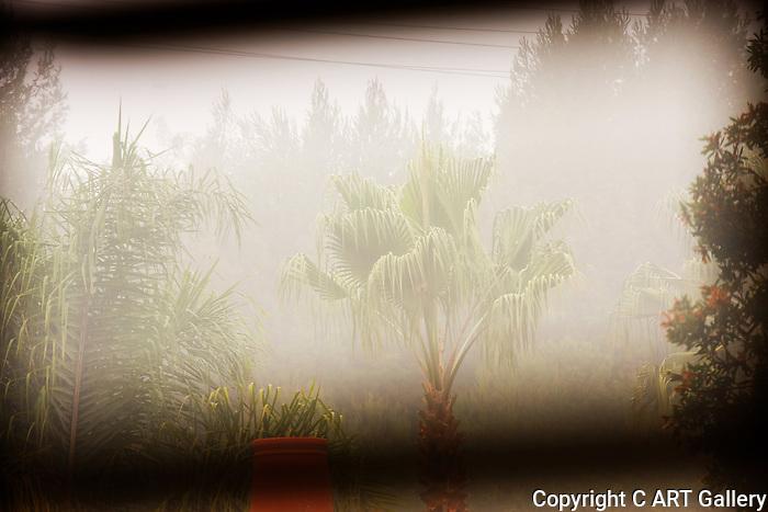 Tree in the mist, Newport Beach, CA.