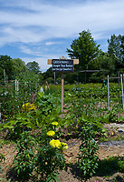 "sign in garden, ""Gardening …. cheaper than therapy and you get tomatoes"", Maine"