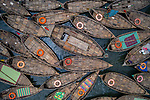 Hundreds of wooden boats resemble flowers as they fan out around their moorings.  The boats, decorated with colourful patterned rugs, are ready to transport workers from the outskirts of the city to their jobs in the centre.<br /> <br /> The Buriganga river is used as a route into Dhaka city for millions of workers every day.  The Bangladeshi capital is one of the most densely populated in the world and home to around 19 million people.  SEE OUR COPY FOR DETAILS.<br /> <br /> Please byline: Azim Khan Ronnie/Solent News<br /> <br /> © Azim Khan Ronnie/Solent News & Photo Agency<br /> UK +44 (0) 2380 458800
