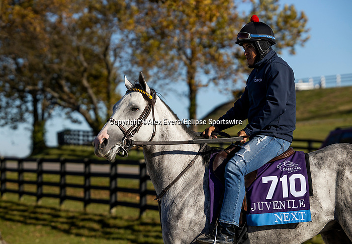 November 4, 2020: Next, trained by trainer Wesley A. Ward, exercises in preparation for the Breeders' Cup Juvenile at Keeneland Racetrack in Lexington, Kentucky on November 4, 2020. Alex Evers/Eclipse Sportswire/Breeders Cup