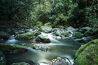 A stream flows over moss-covered rocks near Jackass Ginger Pool along the Judd Hiking Trail, Nu'uanu, O'ahu.