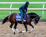 October 30, 2020: Jesus' Team, trained by trainer Jose Francisco D'Angelo, exercises in preparation for the Breeders' Cup Dirt Mile at Keeneland Racetrack in Lexington, Kentucky on October 30, 2020. Scott Serio/Eclipse Sportswire/Breeders Cup/CSM