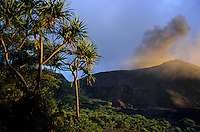 Pandanus (Pandanus tectorius) trees on an ash plain in front of the active volcano, Mount Yasur, Tanna, Vanuatu.